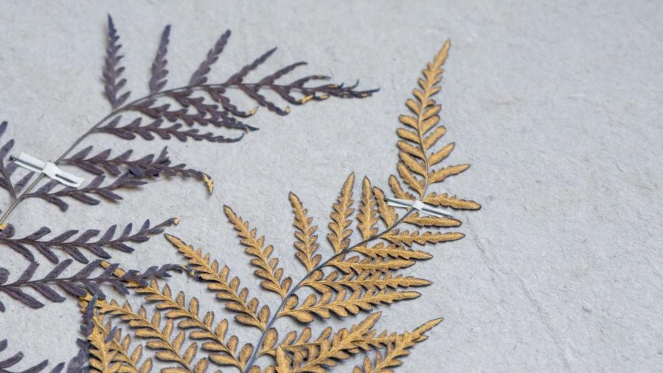 Dior – L'herbier merveilleux